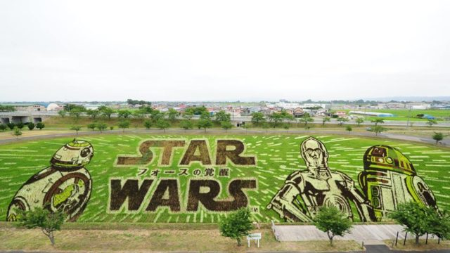Star Wars Rice Patty Field